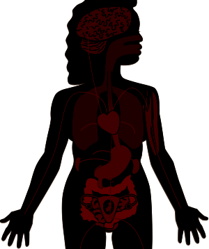 Diagram of the Female body organs